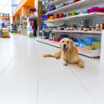 A dog in one of the most popular Austin pet stores.